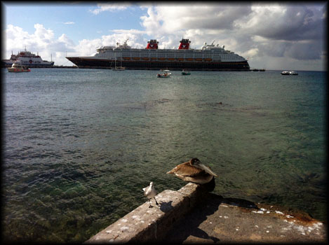 View of The Disney Magic from the shore...and a pelican and a sea bird...from Cozumel, Mexico